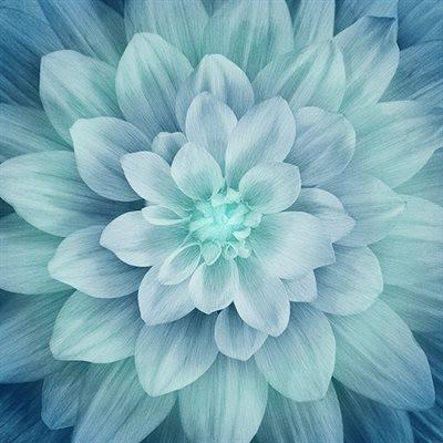 Dream Big Digital Print By Hoffman - Turquoise
