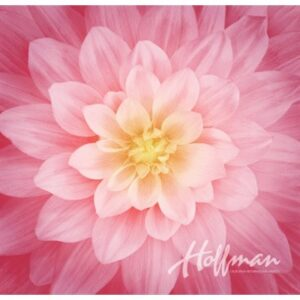Dream Big Digital Print By Hoffman - Wild Rose