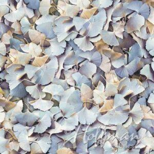 Leaf Me Be Digital Print By Hoffman - Clouds