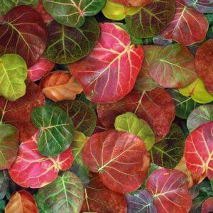Leaf Me Be Ii Digital Print By Hoffman - Amazon