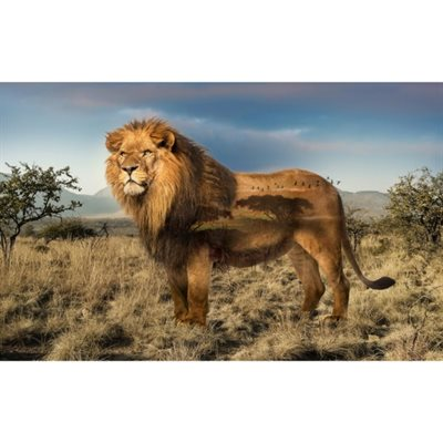 Wild Kingdom Digital Print By Hoffman - Lion