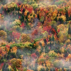 Call Of The Wild Fall Digital Print By Hoffman - Autumn