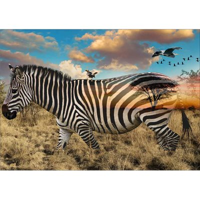 Call Of The Wild Digital Print By Hoffman - Zebra