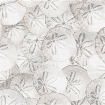 Natures Narratives By Hoffman - Sand Dollar