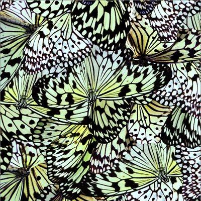 Natures Narratives By Hoffman - Mariposa