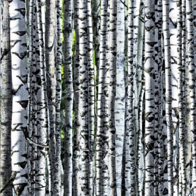 Natures Narratives By Hoffman - Birch