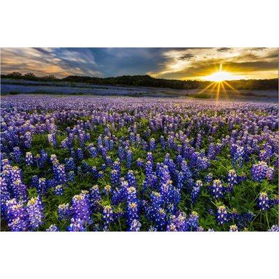 Sun Up To Sun Down Digital Print By Hoffman - Blue Bonnet