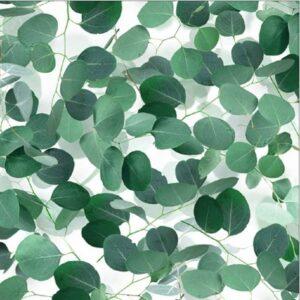 Natures Narratives By Hoffman - Eucalyptus