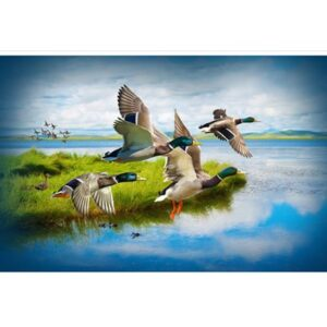 Call Of The Wild Digital Print By Hoffman - Mallard