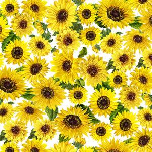 Sunflower Sunrise By Kanvas Studio For Benartex - White